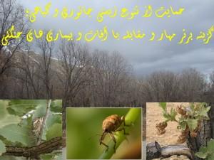 آفات و بیماریهای جنگلی